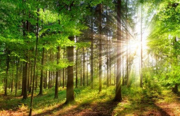 L'investissement forestier, des avantages méconnus !